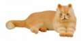 Pisica persana - Collecta