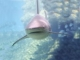 Proiector tip lanterna - Animale marine