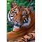 Puzzle cu 1000 piese Tigru