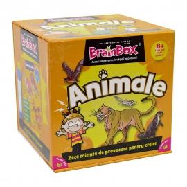 Animale – BrainBox