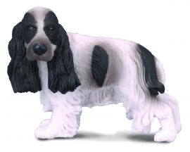 Cocker Spaniel Englezesc - Collecta
