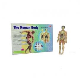 Set educativ Corpul omenesc