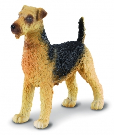 Terrierul Airedale - Collecta