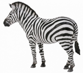 Zebra - Collecta