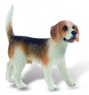 Caine Beagle
