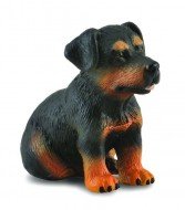 Catelus Rottweiler - Collecta