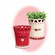 Ghiveci ornamental cu inimioare