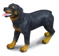 Rottweiler - Collecta
